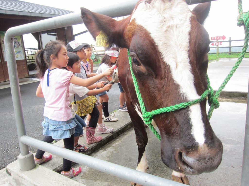 牛さんの体をブラッシング。ごしごしー。