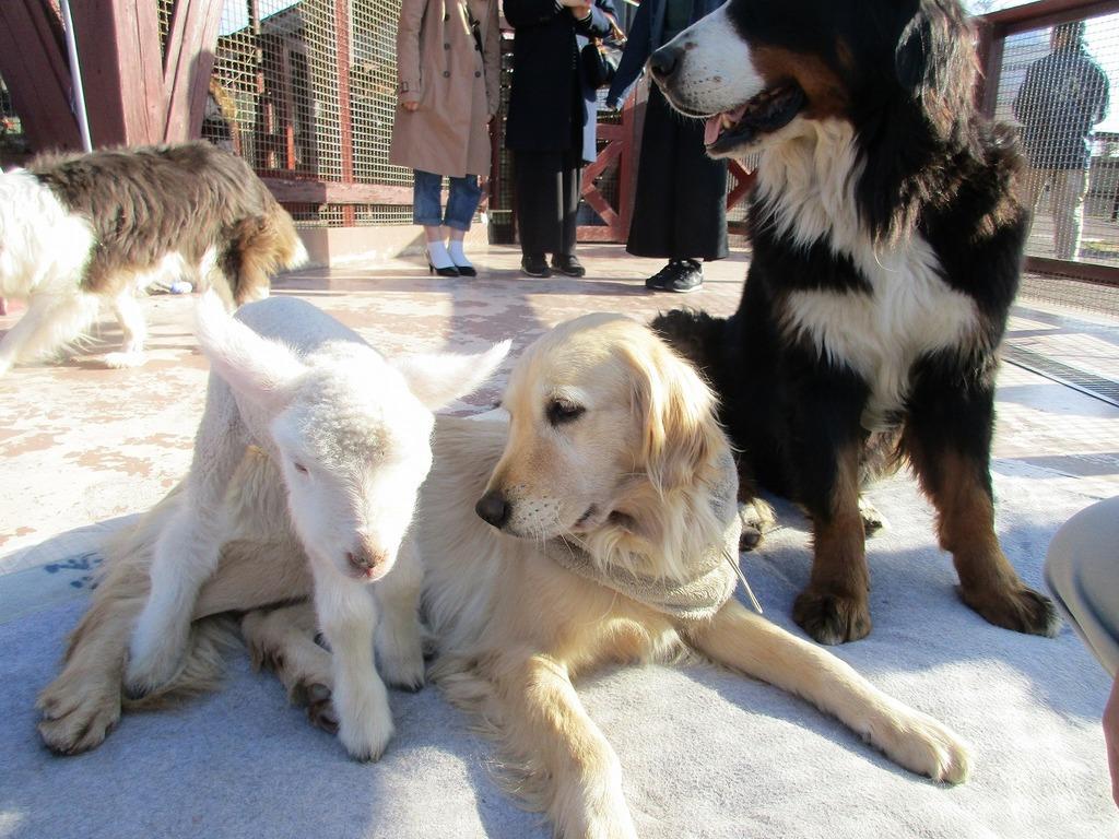 まるこ(犬):「わ~ぁい、またお友達ができた~」あずみ(羊)『お姉ちゃんよろしくね♪』