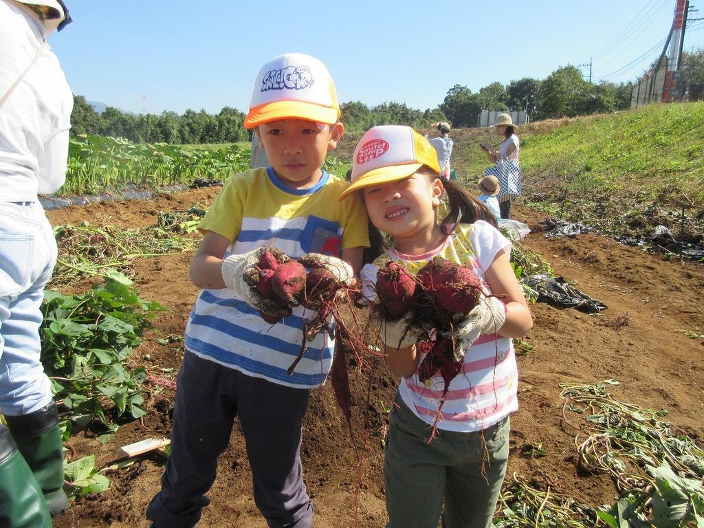 植え付けされた方は秋に収穫体験も!1区画だけで4~5㎏収穫できるかも♪