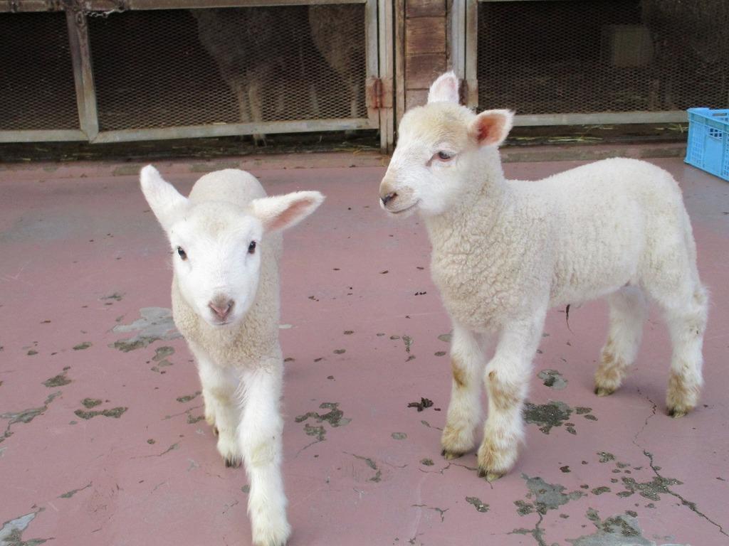 きたちゃん(左)とトミー(右)