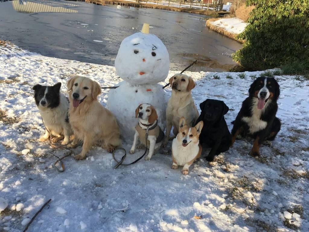 お散歩時間の夕方に犬たちは雪だるまとパチリ☆