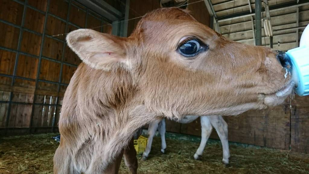 ①ミルクを飲みながらカメラ目線★