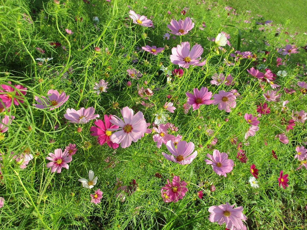 グリーンの絨毯の上に咲く、白・ピンク・赤色の花がひきたちます♬