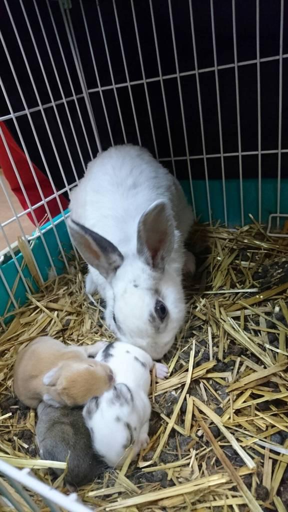 お母さんウサギのきららが、私たちにかわいい3匹を紹介してくれました♪
