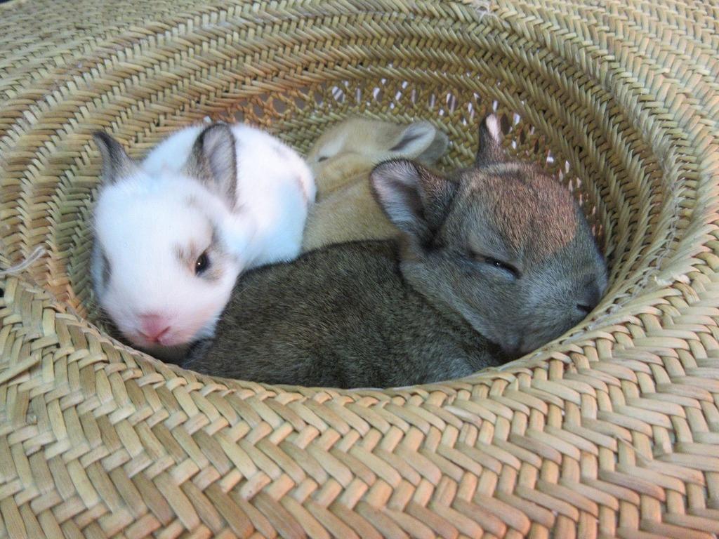 ネコはこたつで丸くなる♪ならぬ ウサギは仲良く丸くなる~です♪