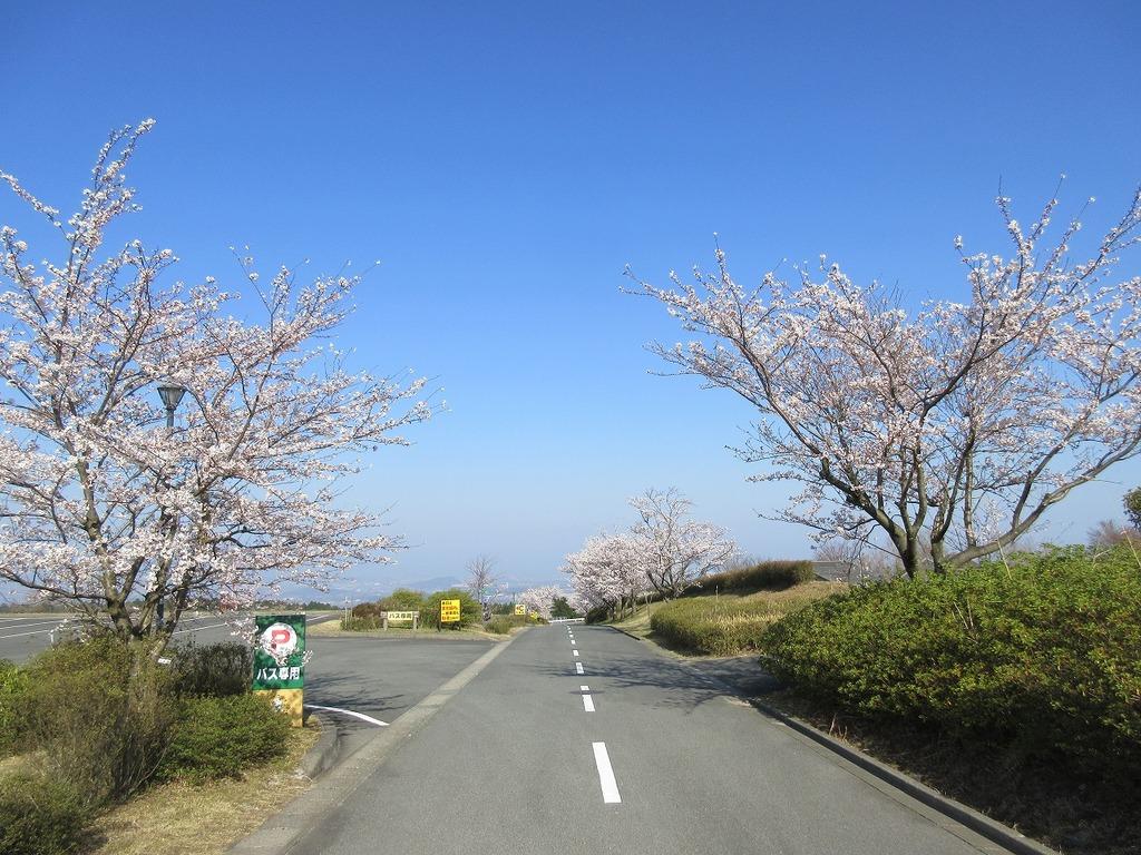 熊本市内と桜・青空のコラボレーション♪