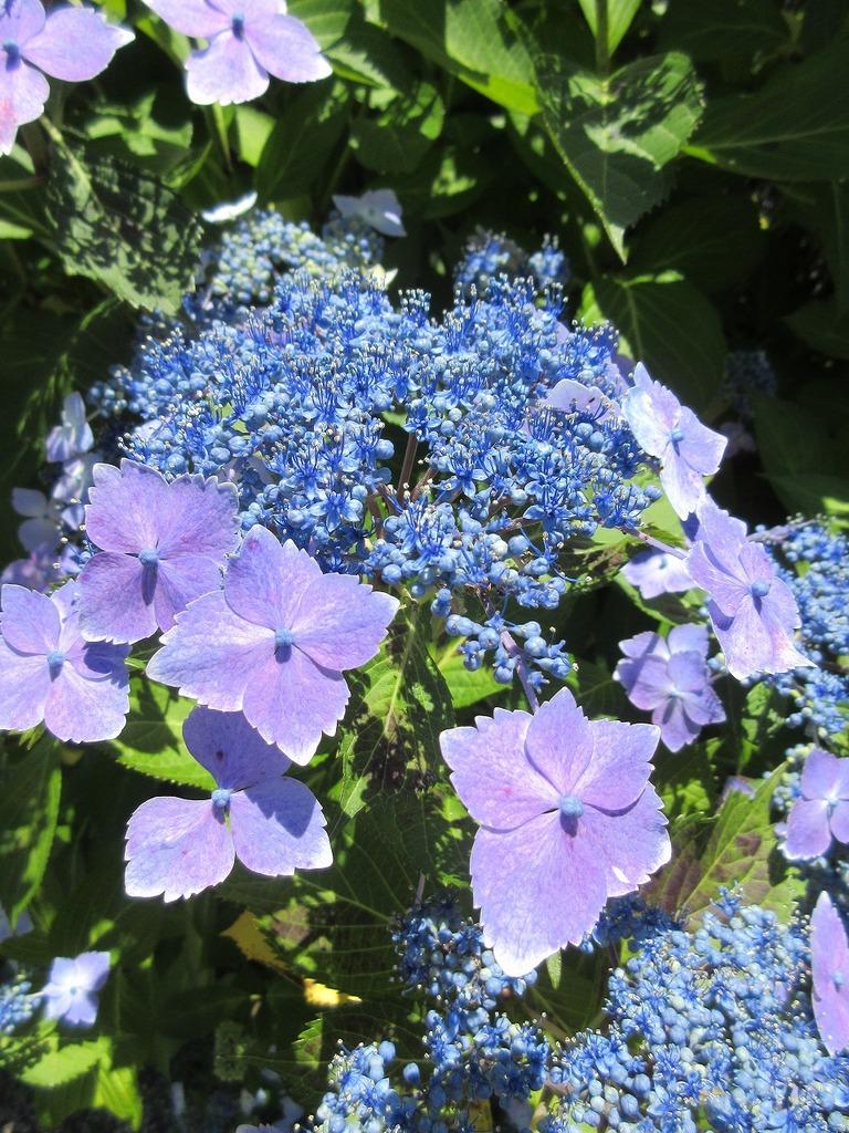 綺麗な青紫色♪