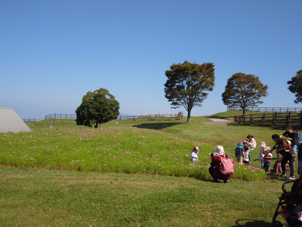 かわいい子どもたちは、コスモスと青空に囲まれていました