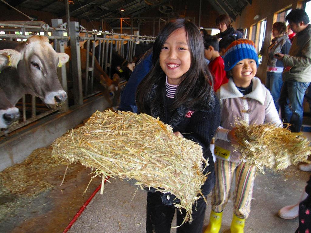 エサやりや、ブラッシング・牛舎掃除・搾乳を体験しました!
