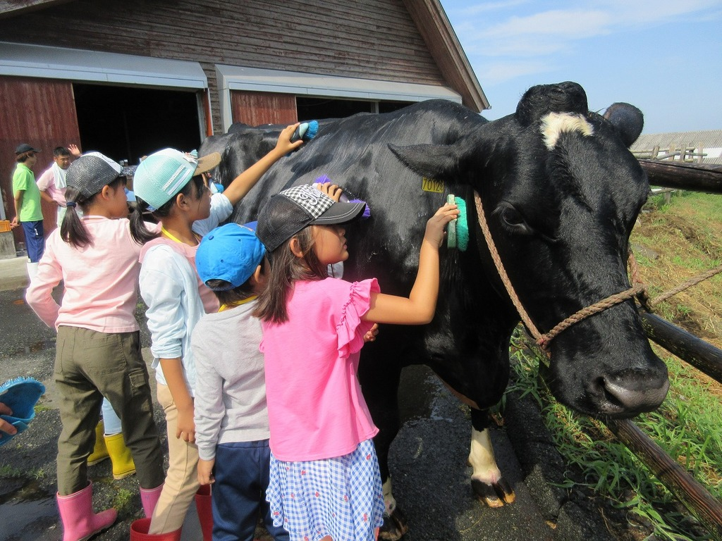 牧場教室『牛さんのシャンプー体験』