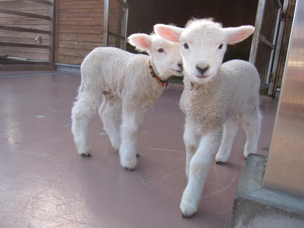 南(羊)の双子の息子まだスリムな『たつや』『かずや』です☆