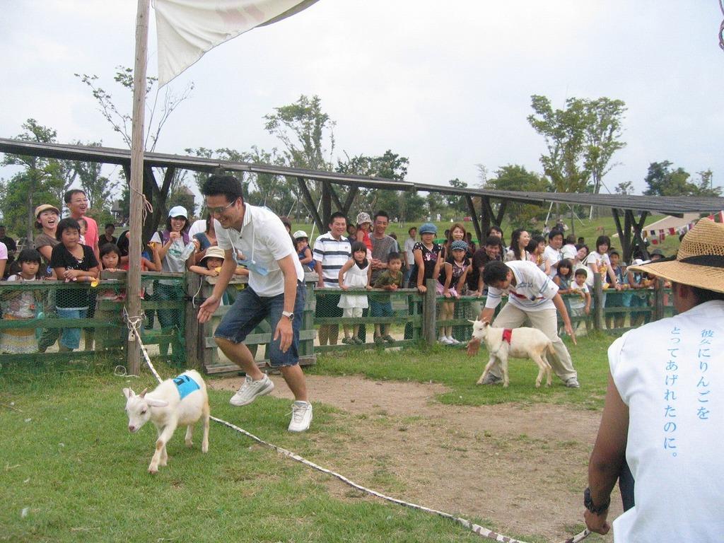 ヤギさんや、今年生まれの羊さん、カモさん達とペアを組んで走るダービーです☆