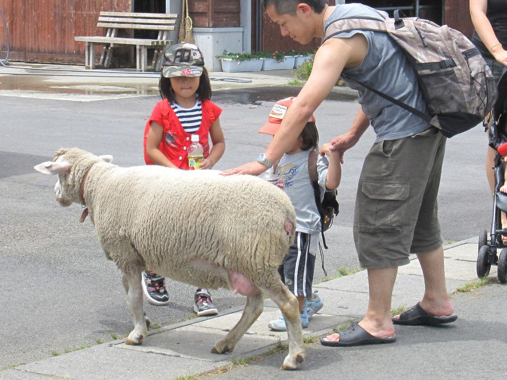 やさしい羊さんなので、やさしく触ってあげてね!