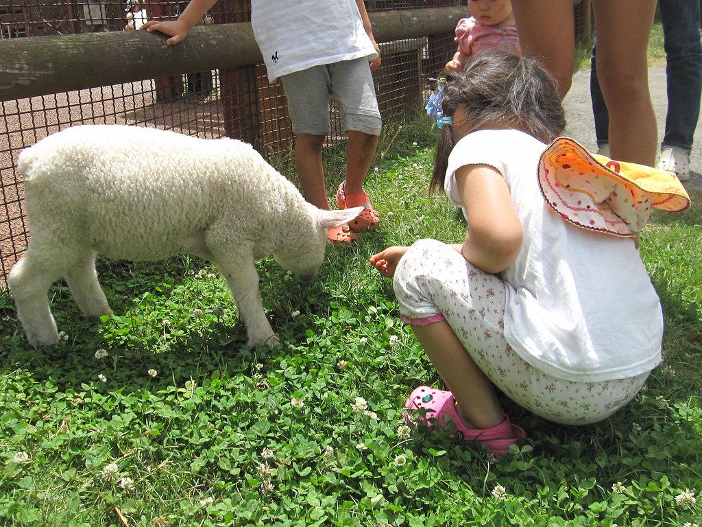 子羊さんは、ぬいぐるみのようにふわふわです。