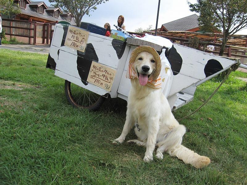 牛乳レディのまるこ(犬・♀)