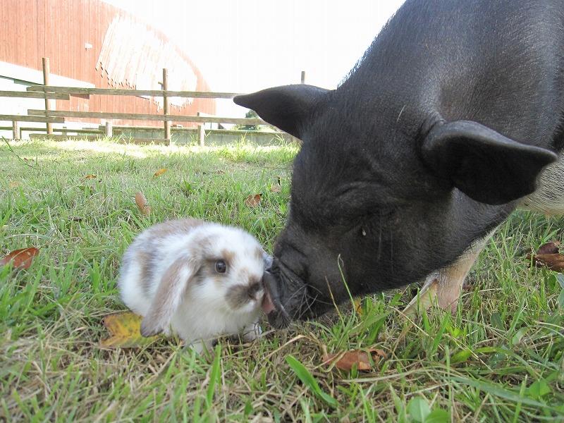 子豚さんとパシャリ☆