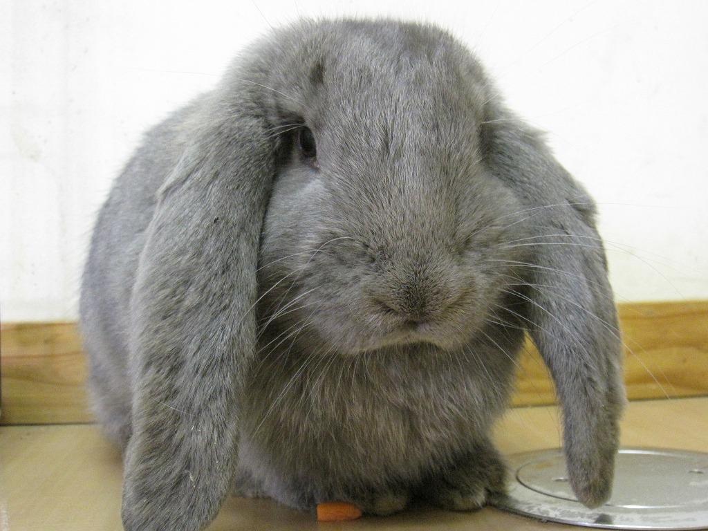 ウサギの画像 p1_25