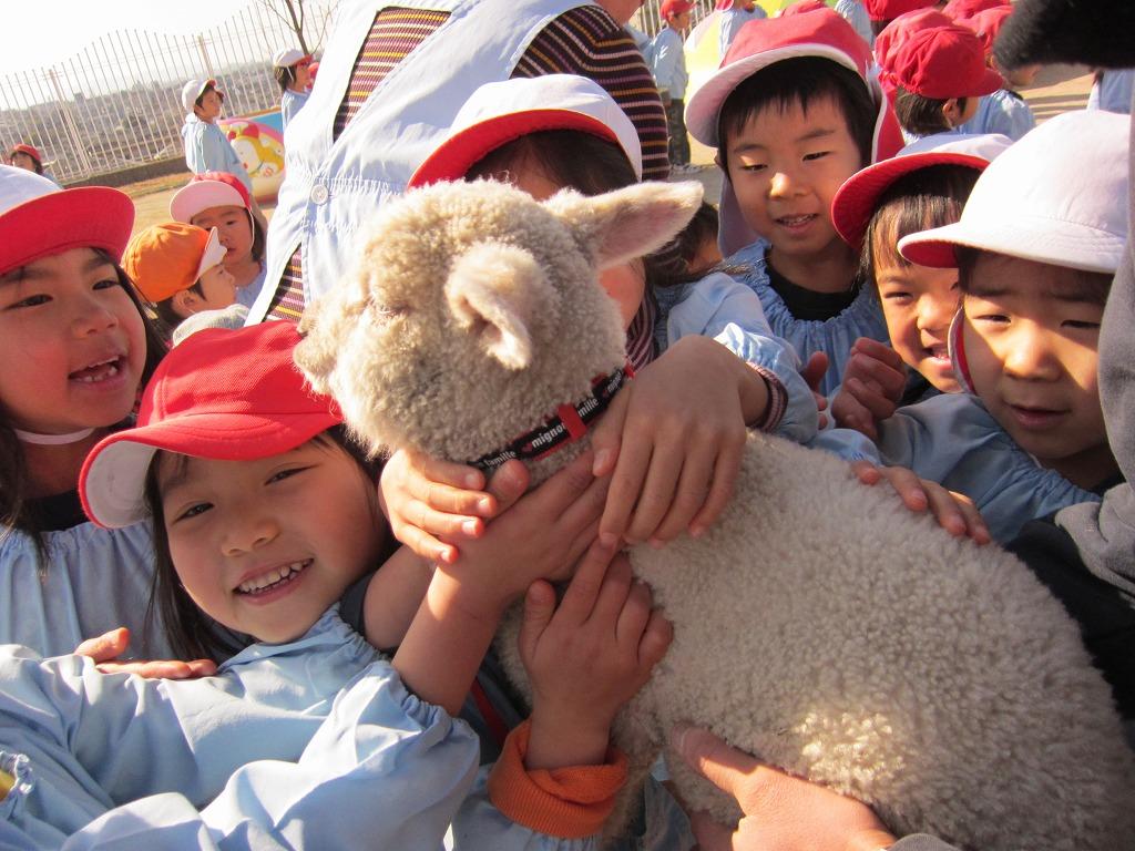 ヤギや羊、牧羊犬などとのふれあいは、小さいお子さんから大人の方まで大人気。癒しのスペースです。