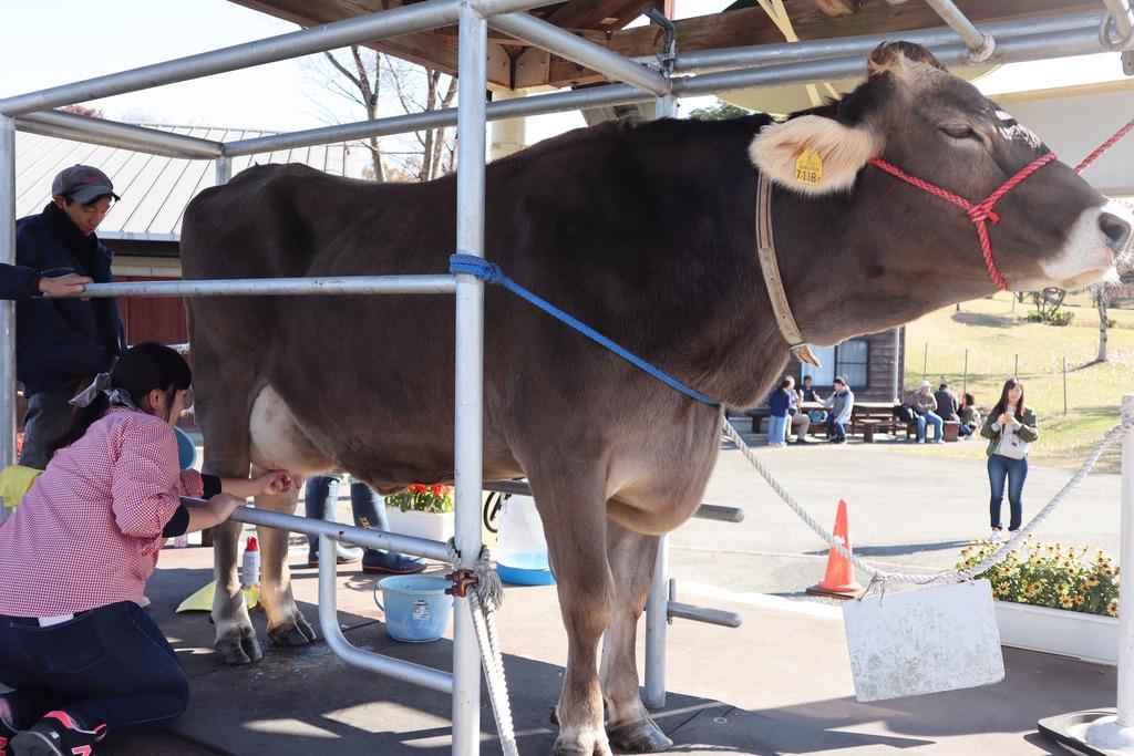 阿蘇ミルク牧場でも、人気の体験イベントです。