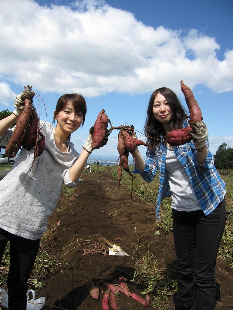 お芋も掘れます☆(土日祝14:00~)一袋 約4kg 1000円