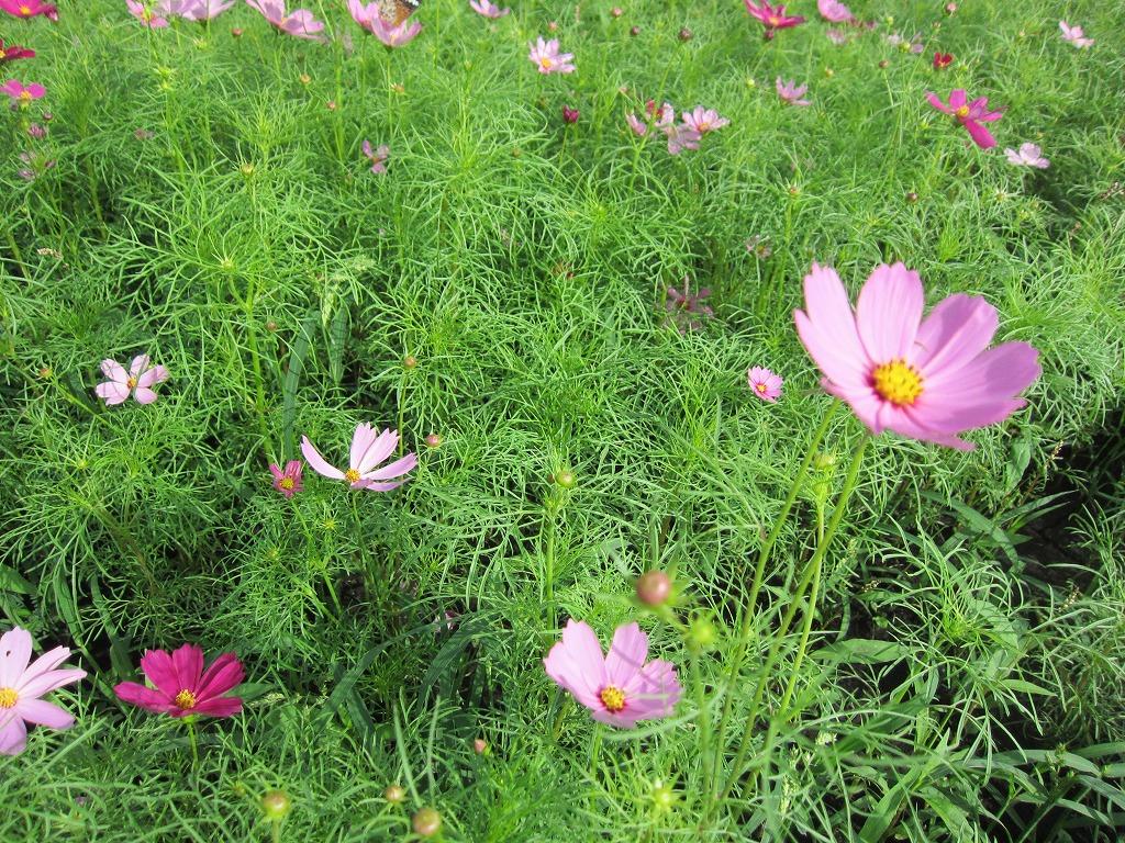 お花が、ちらり☆ほらり☆