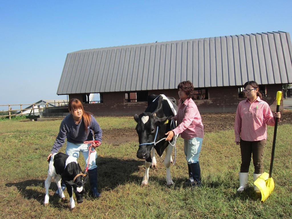 牛舎ガールたちと『ツノ親子』。。。