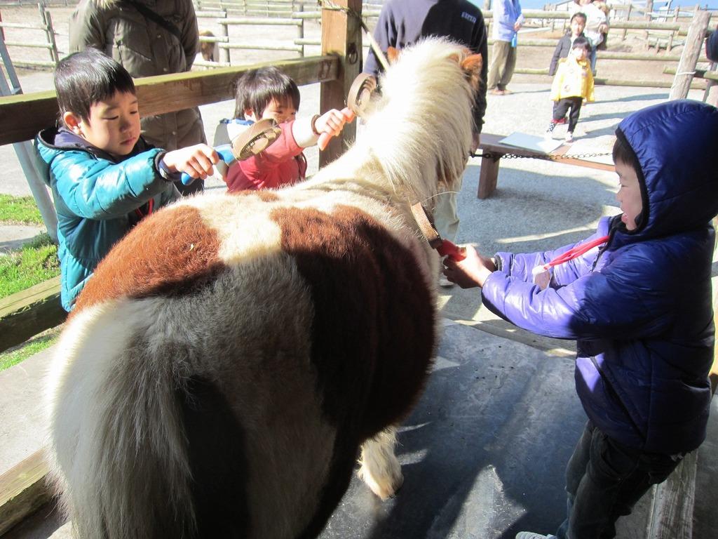 こちらは、ポニーのお話と馬のお手入れ(ブラッシング体験)にチャレンジしたよ☆