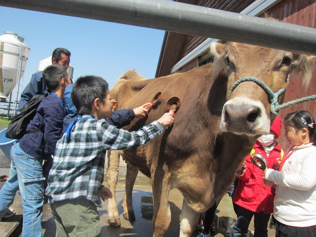 心を込め、牛の給餌やブラシング、体調チェック(心音聞き)など行いました☆