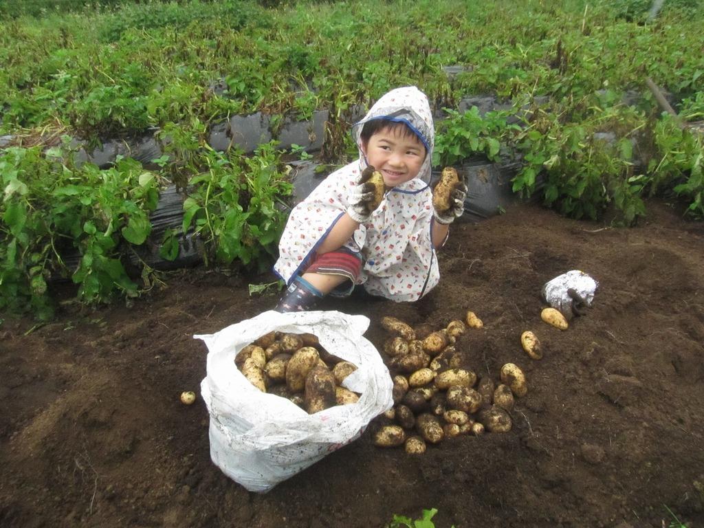 大きいお芋や可愛いお芋♪自分で植え付けしたので、愛情もいっぱい~!