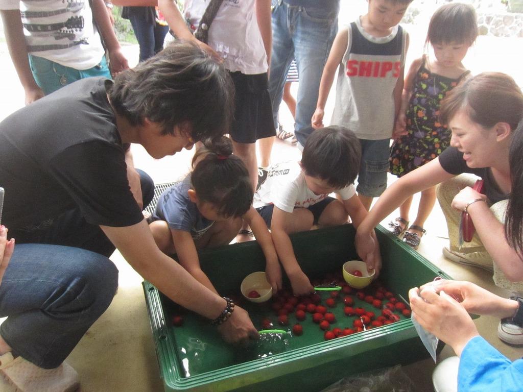 金魚すくいならぬ『トマトすくい』☆真っ赤なトマトいくつとれるかな?
