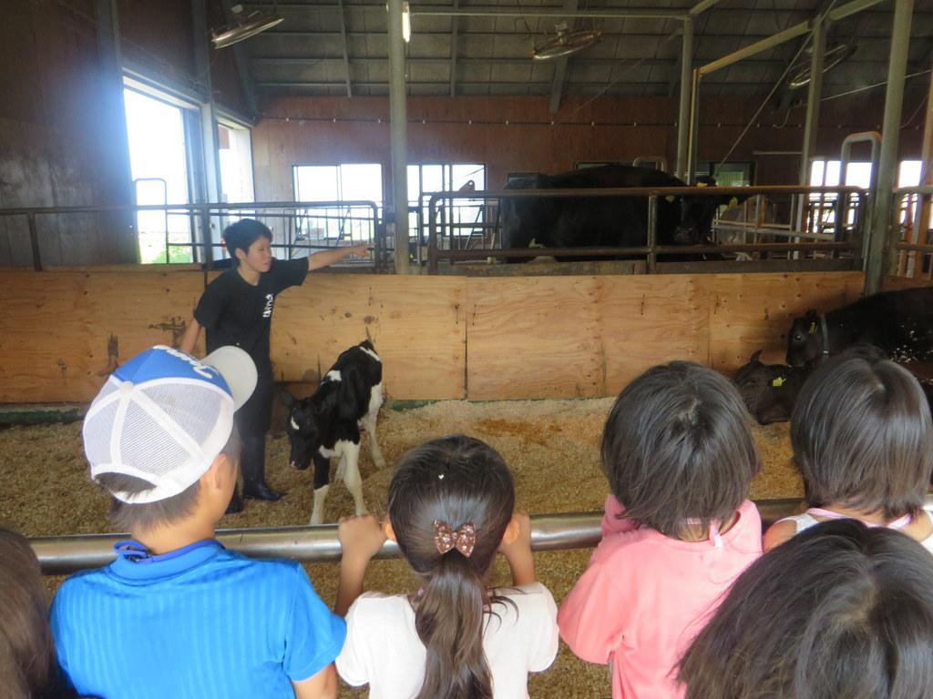 この日に生まれたばかりの子牛を見れたよ☆すぐ立つことができるんだネ!すごいな~