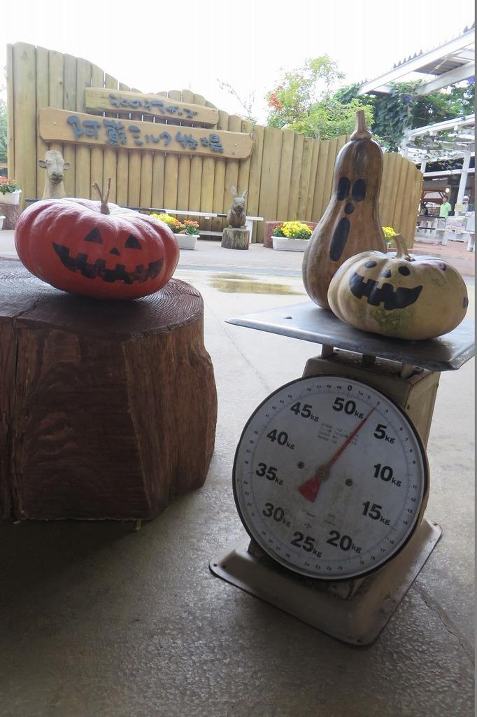 おばけかぼちゃ、計量中★