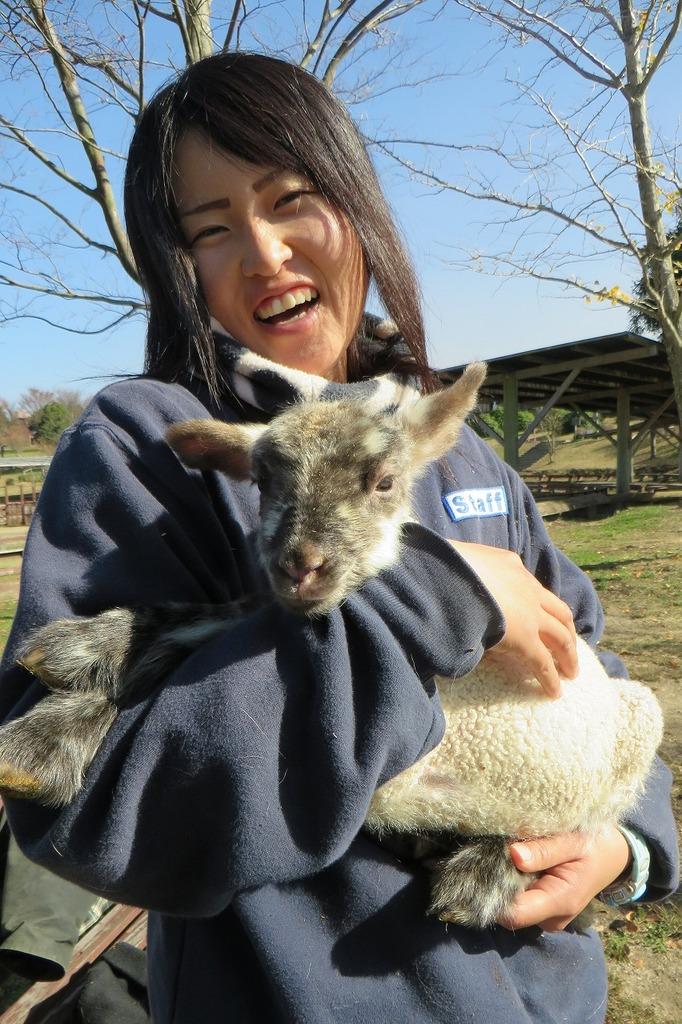 12月8日に生まれた元気なメスの羊です会いに来て下さいね☆