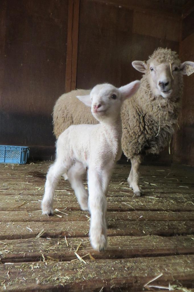 """1月8日、""""ひめじ""""お母さんは、気づけば放牧場で出産していました!頑張ったねひめじ!!"""