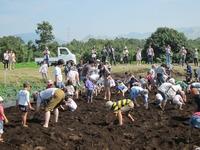 2015 コスモスと大収穫祭
