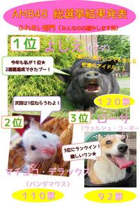 秋のAMB48動物総選挙2015☆結果発表