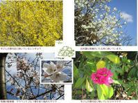 春のお花がたくさん★