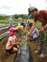 2016年 サツマイモ植え付け体験報告★