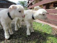 双子の赤ちゃん誕生!
