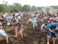 2016 コスモス&大収穫祭