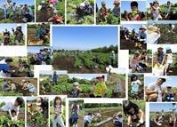 2018 会員イベントじゃがいも収穫体験 報告