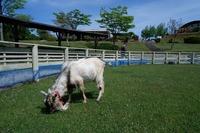 ☆牧場の草刈り隊☆
