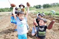 2020『サツマイモ・里芋収穫体験』はじまりました