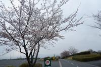 2021年 桜の開花状況~part3~