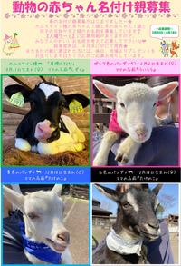 2021年 動物の名付け親募集&AMB動物総選挙始まりました