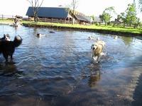 2010 牧場の暑い朝