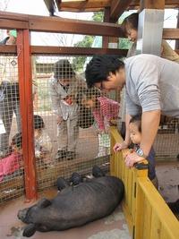 豚さんの赤ちゃん~その(2)~☆11日の夜のこと・・・