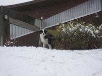 今日の雪と犬☆その2