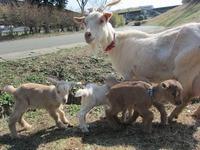 牧場初の、4つ子が産まれました♪