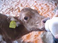 牛舎からです!2009春が来ました!(牛舎担当:中島より)